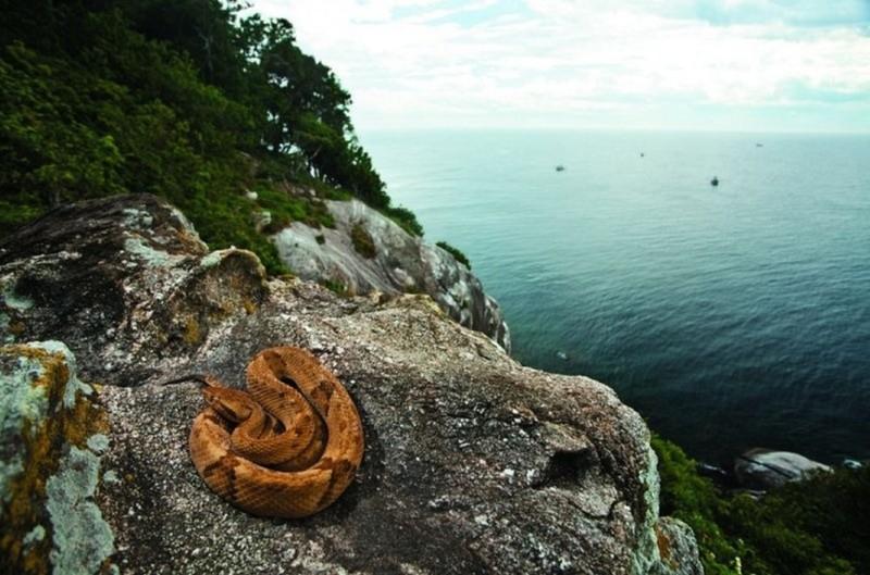 9. Змеиный остров вокруг света, запрещенные места, интересные факты