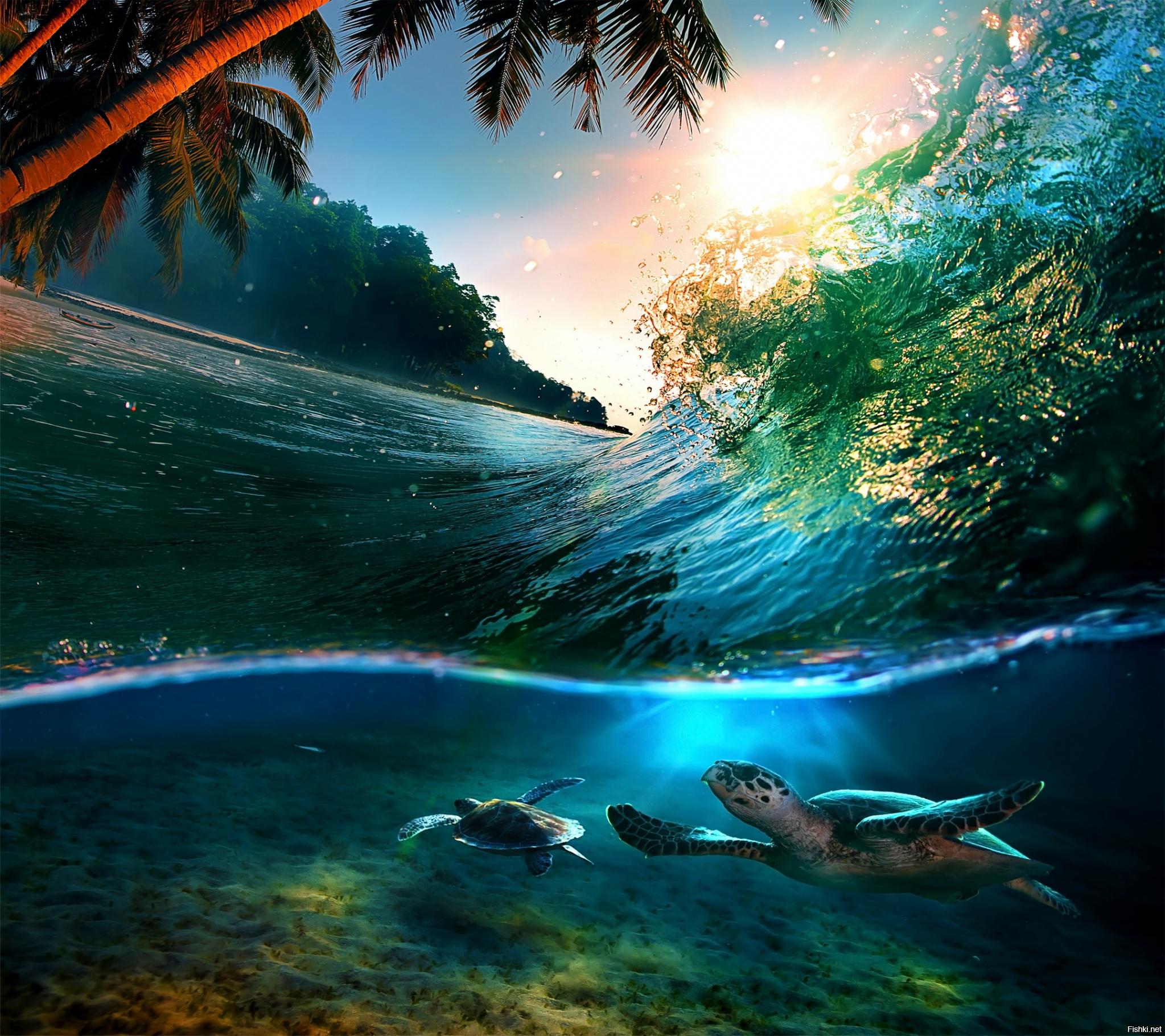 любительские картинки необыкновенные океаны было войны