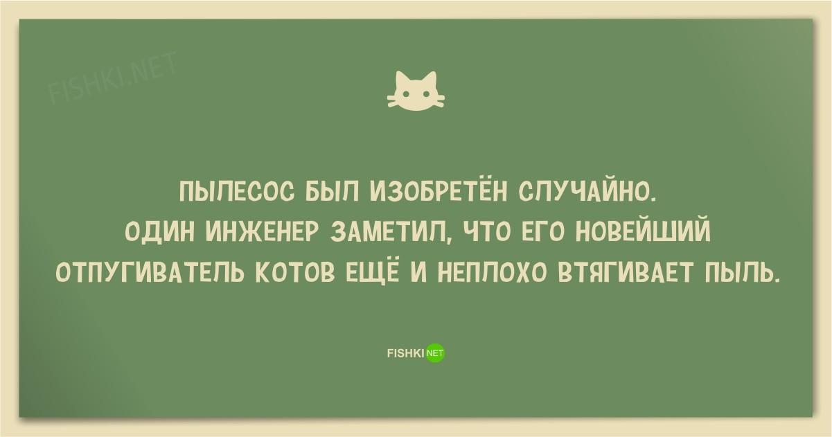 Смешные анекдоты про котов картинки