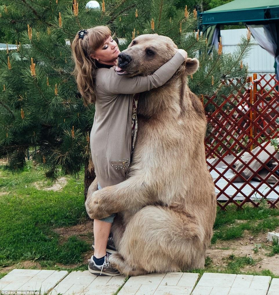 Член медвежий