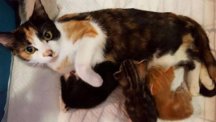 По сообщениям женщины, ранее знавшей эту бездомную кошку, она кормила её и её котят, но её сосед попытался убить кошку-мать жестокость, животные, кошка, чудо