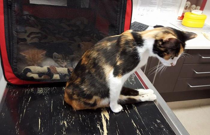 Тем не менее, на следующий день произошло невероятное: кошка пришла туда, где оставила котят! жестокость, животные, кошка, чудо
