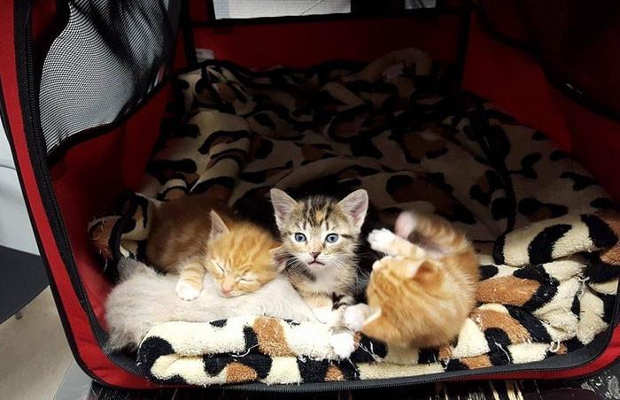 К тому моменту ее детей уже забрал отряд зоозащитников жестокость, животные, кошка, чудо