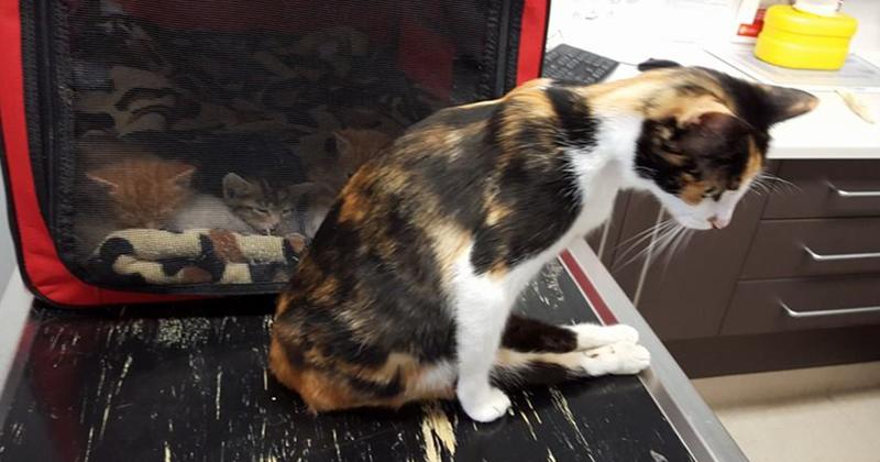 Парализованная кошка доползла до места, где оставила котят, после того, как человек пытался ее убить жестокость, животные, кошка, чудо