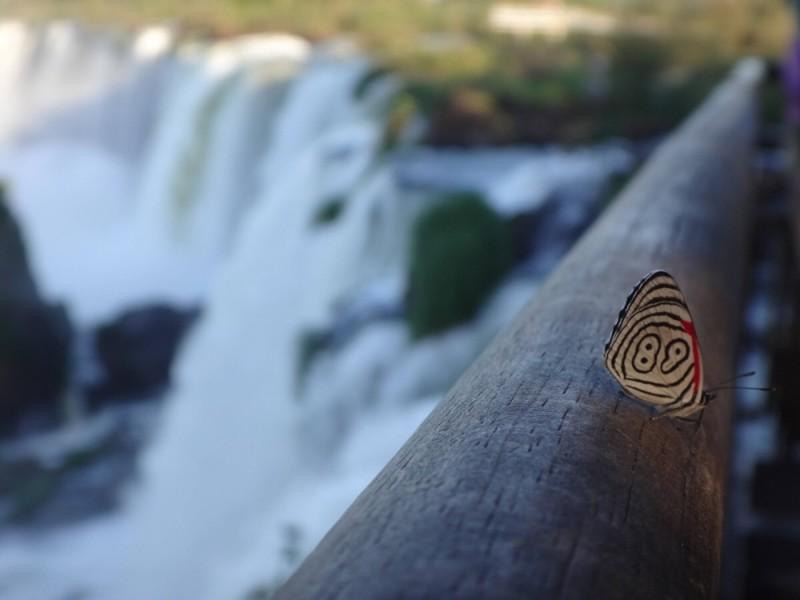 Порядковый номер природа, фотографии