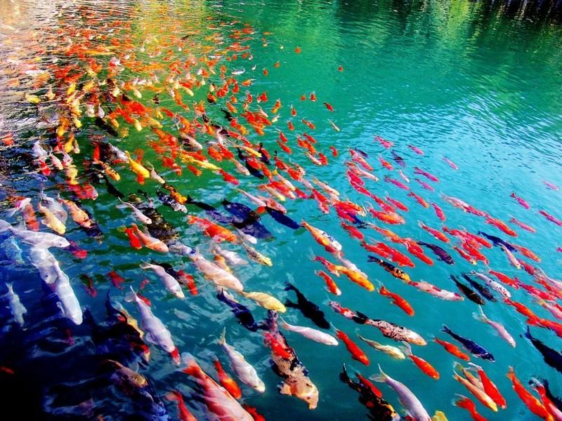 Кристально чистая вода природа, фотографии