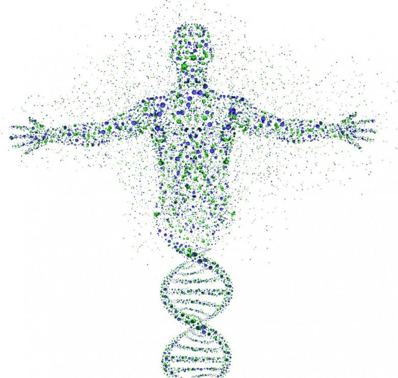 9. Генетическое разнообразие древних людей крайне ограничено история, первобытные люди, факты