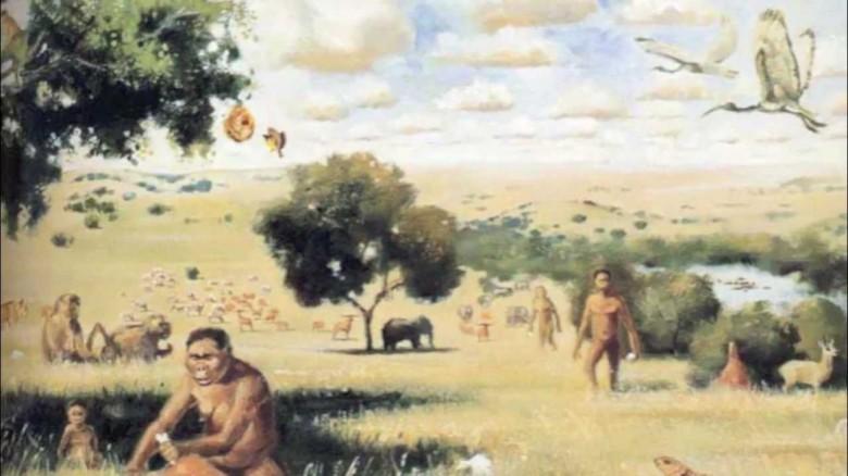 2. Наша эволюция была обусловлена употреблением разнообразной пищи история, первобытные люди, факты