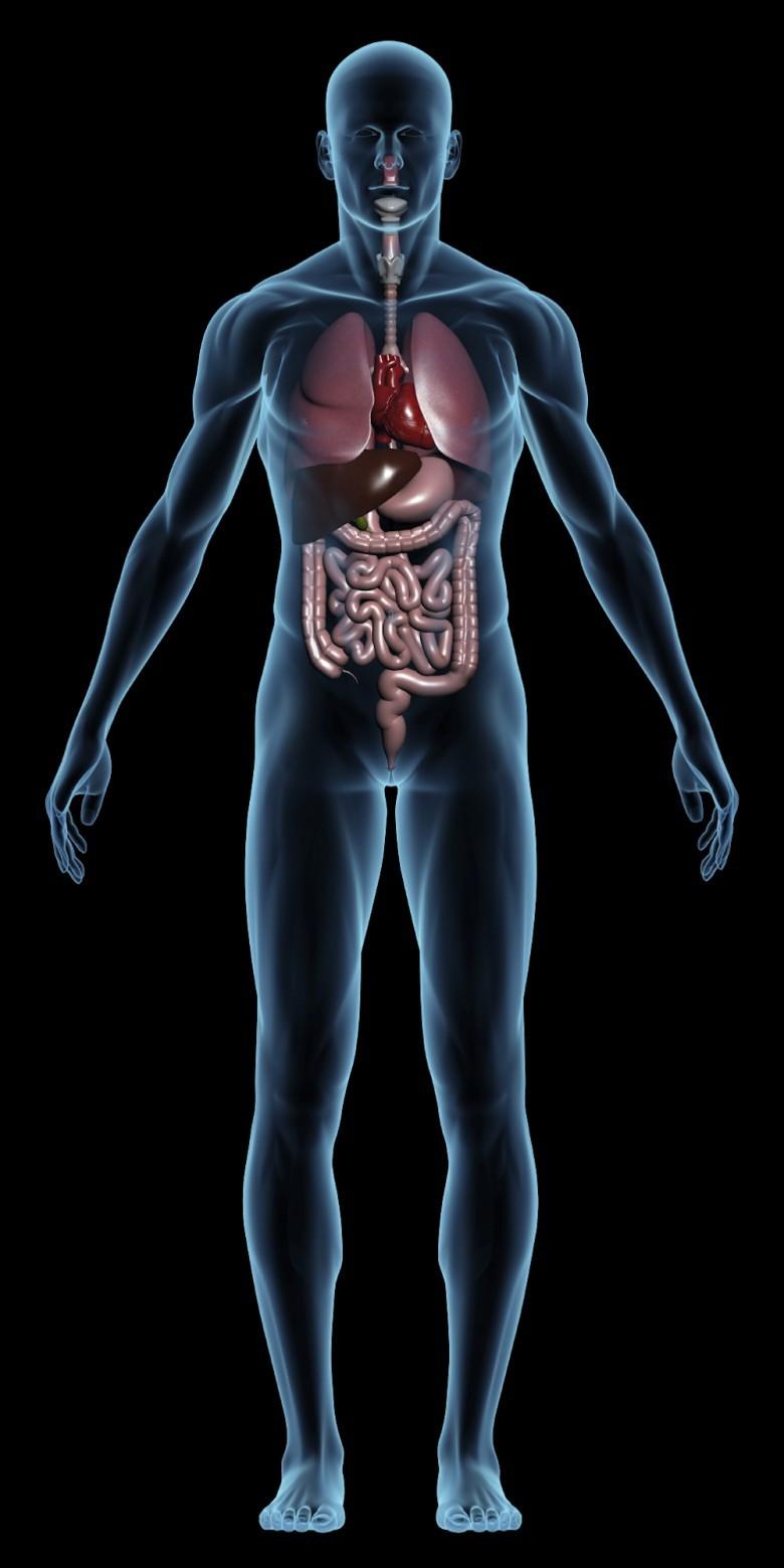 3. Долголетие человека может быть связано с медленным метаболизмом история, первобытные люди, факты