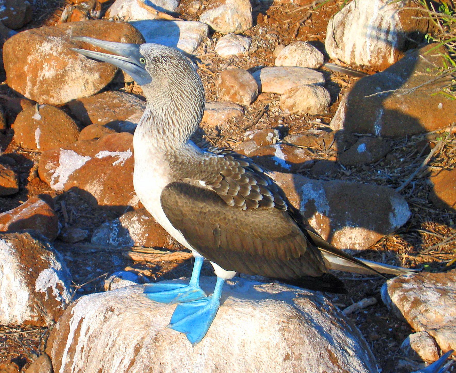 факультет радиофизики, голубая птица фото олуша продемонстрировала воздушное