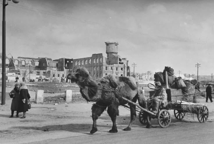 Верблюды на службе 22 июня, Великая Отечественная Война, день памяти и скорби