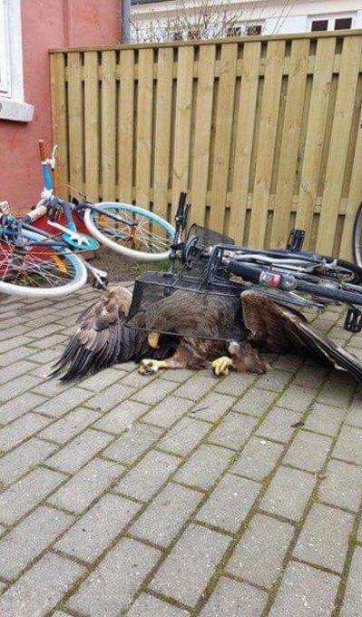 Бедный орел животные, люди, позитив