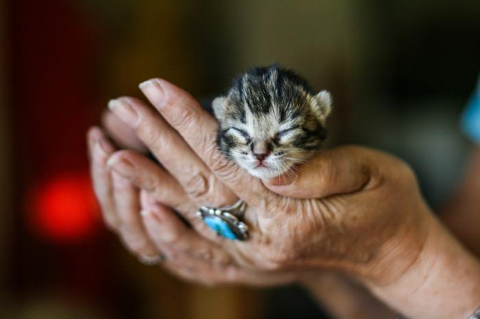 Малюсенький котенок ростом с мизинец фото, куколд сексвайф фото видео онлайн