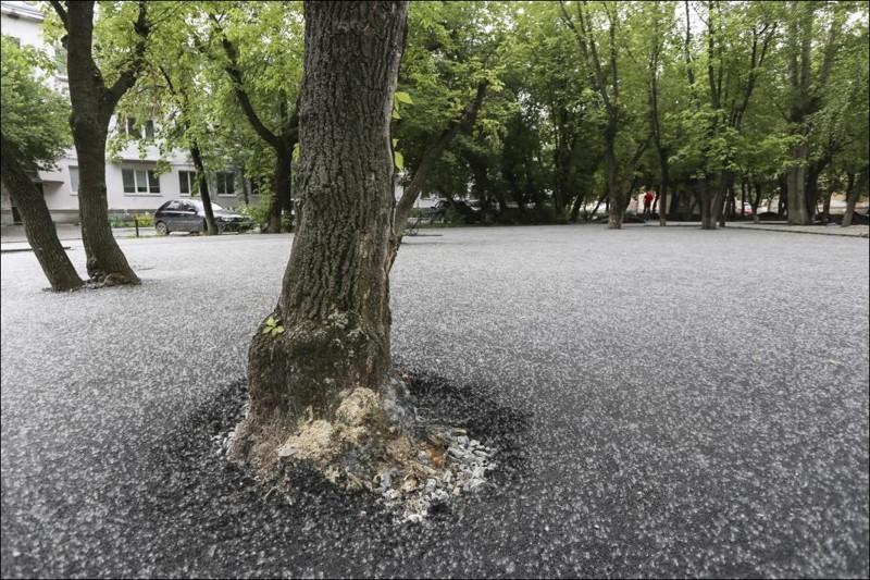 Деревья на асфальте фильм