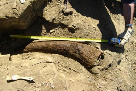 Динозавры - современники людей? загадки, история человечества, находки, непознанное