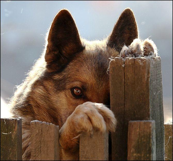 Как сделать чтоб у пса стоял член