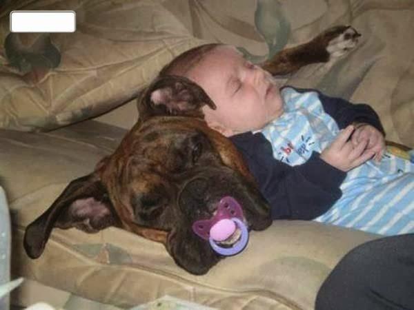 А если серьезно, то собаки и кошки - это замечательные няньки  дети, прикол, родители, юмор