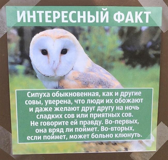 интересные факты о животных с картинками для 4 класса своего уродливого