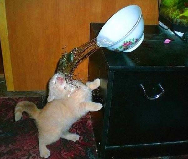 3. Кошка стопроцентно жалеет о своем решении