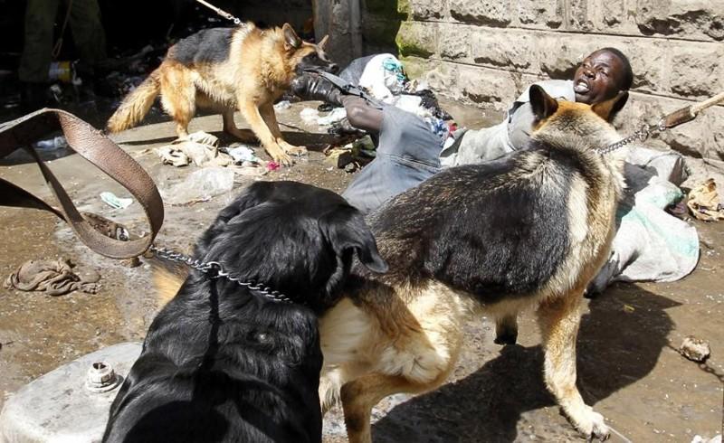 Полицейские собачки поймали вора. Обворовывал дома этнических сомалийцев в Истли, районе Найроби, столицы Кении. Ноябрь 2012. животные, люди