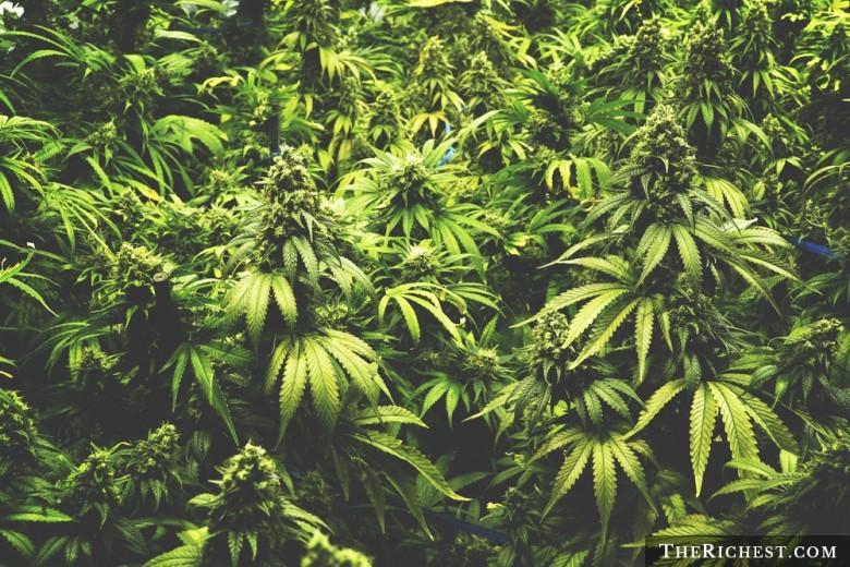 Конопля из канализации как долго держится в моче марихуана