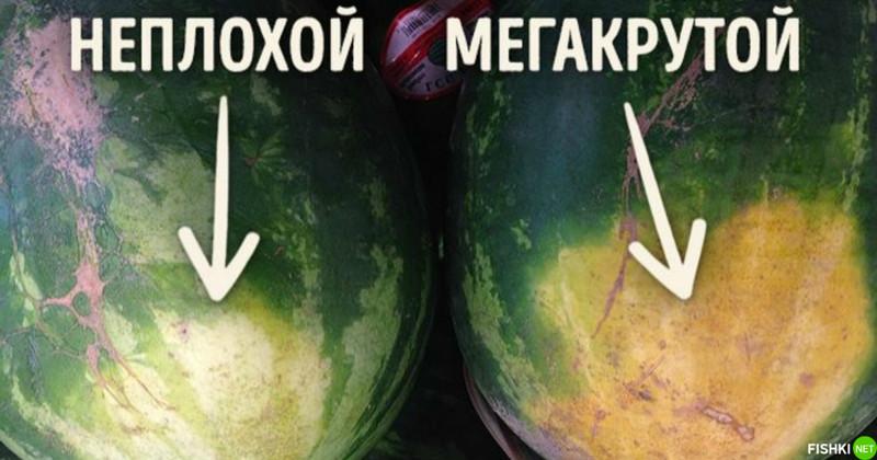 Спелость арбуза и натуральность его происхождения можно определить и по земляному пятну арбуз, информация, нитраты, полезное