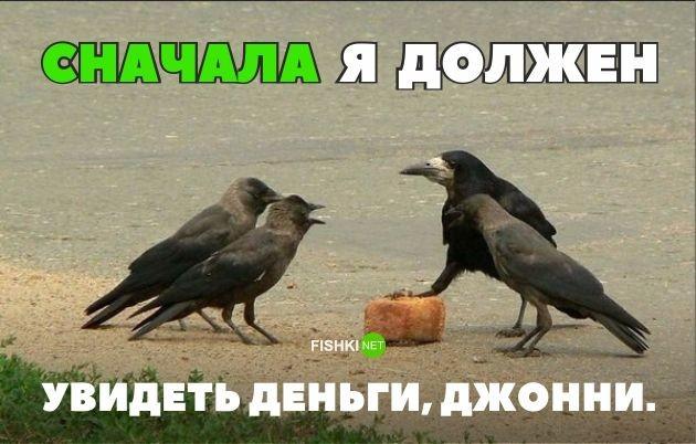 http://cdn.fishki.net/upload/post/2016/08/12/2039992/1-14.jpg