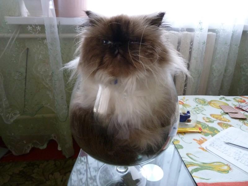 А вот коты, так и вовсе могут поместиться практически где угодно впихнуть, прикол, юмор