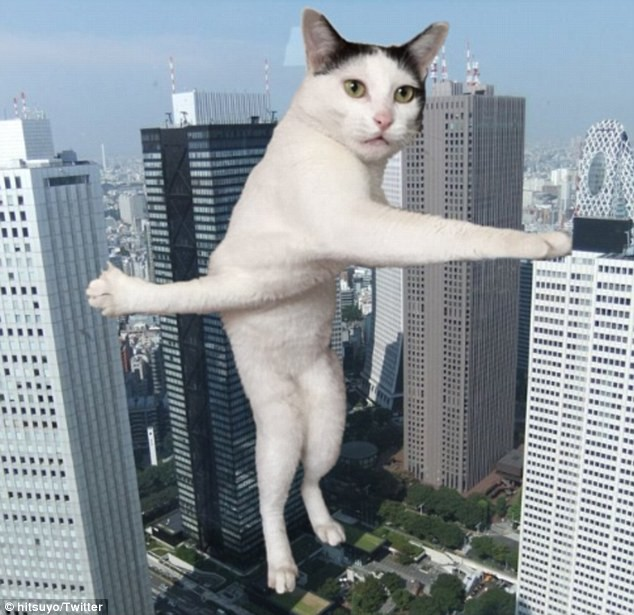 Надписями, кот прикольные картинки фотошоп