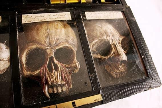 Черепа вампиров мистика, находки, тайны, чудовища