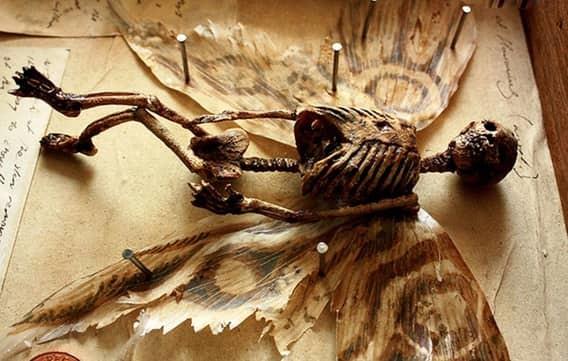 Скелет эльфа мистика, находки, тайны, чудовища