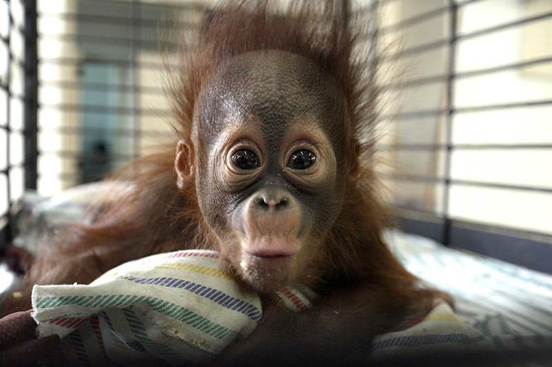 Интересный факт о сексе обезьян