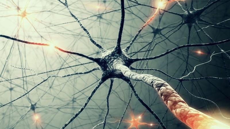Рост клеток мозга с возрастом прекращается интересное, мифы, наука