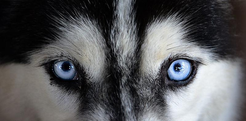 Собаки видят всё в чёрно-белом цвете. интересное, мифы, наука