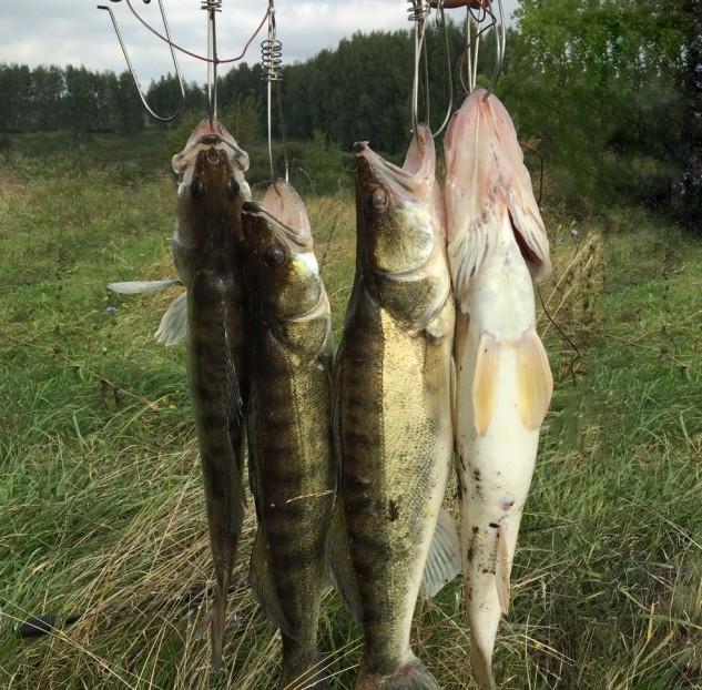 мелкого отпускал... Этих забрал.  рыбалка, своими руками, сделай сам