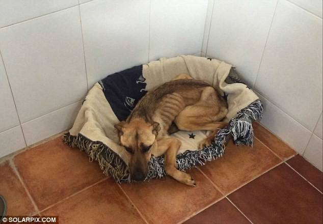 На грани смерти: невероятная история спасения истощенной собаки