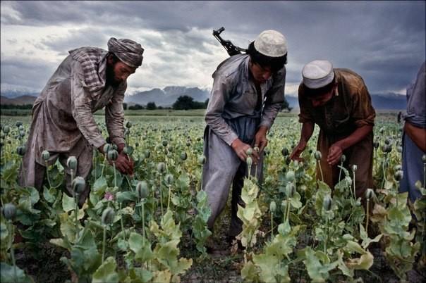 На маковых полях Афганистана, 1992 год. было, история, фото