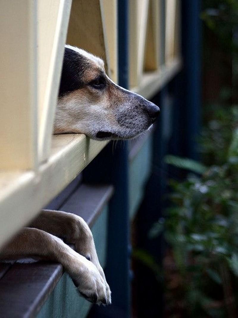 Смешные картинки собаки и окна
