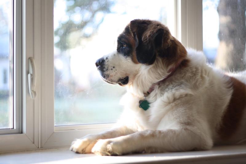 картинки ждущих собак потеряете