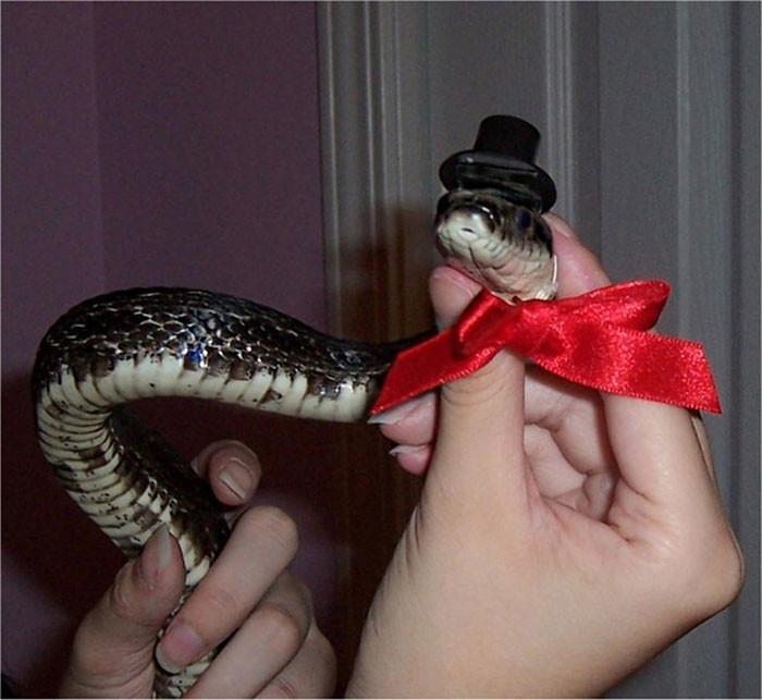 Змея в картинках смешные