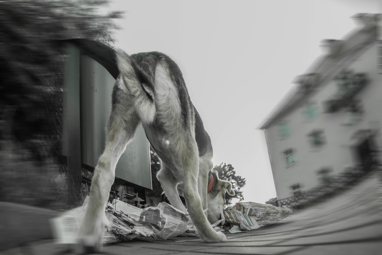 Картинка как видят собаки наш мир