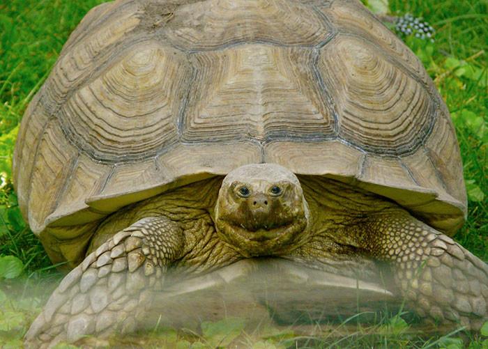 Черепаха глаза, животные, фотошоп