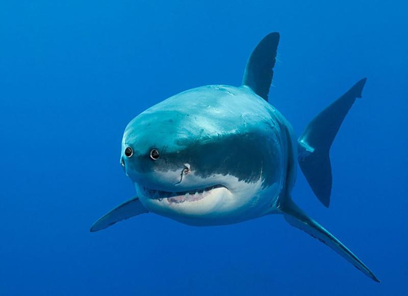 Акула глаза, животные, фотошоп