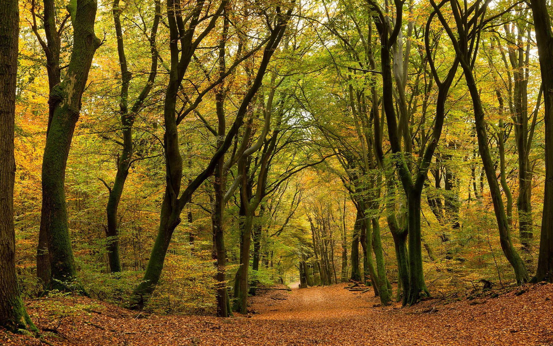 осенний лес фото картинки на рабочий стол что