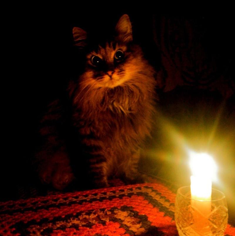 Картинка кошка с лампой