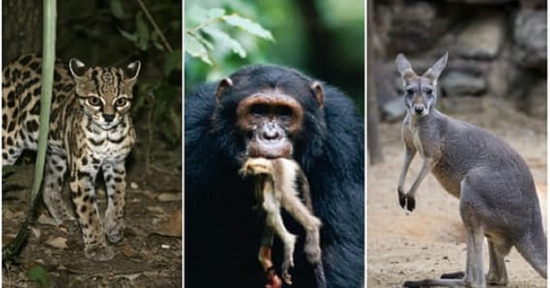 Как трахаются в дикой природе крупные звери
