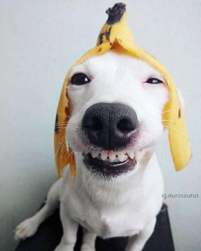 Картинки собака улыбака