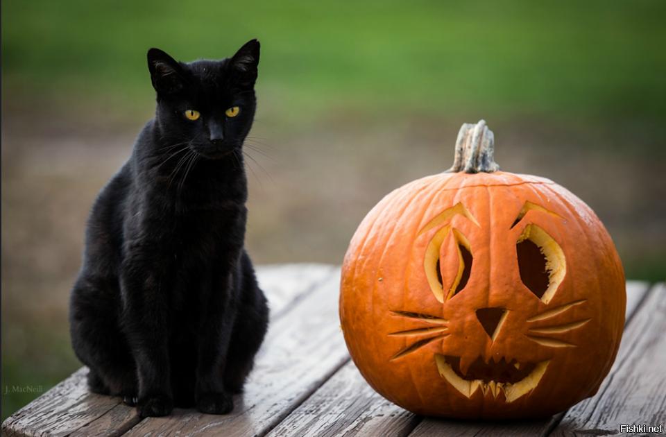 что коты на хэллоуин свадебный день
