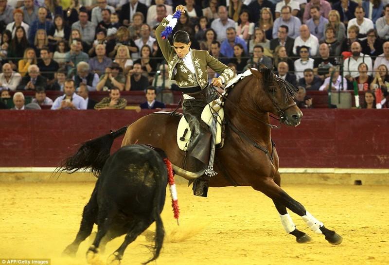 Он с размаху боднул лошадь, и та сбросила наездницу быки, испания, коррида, месть