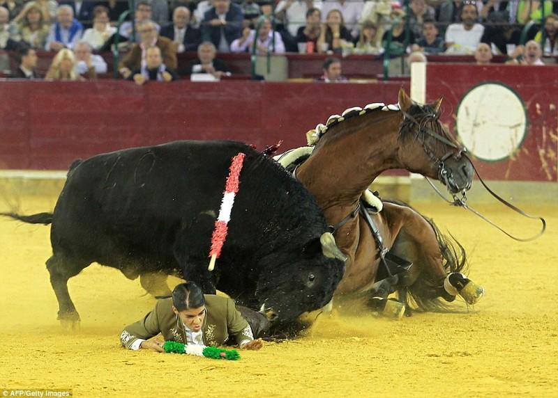 Не лучший момент в ее жизни быки, испания, коррида, месть